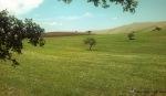 Spring-skyland